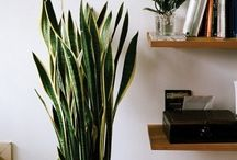 home and plants / I want to have a house full of plants. Unfortunately, I keep killing them. Need to learn how to take care of them. Also to be inspired by pretty houseplants, planters, pots, decorating, etc. With help from my mom.