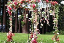 alex nunta