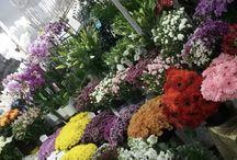 Yenikent flowers