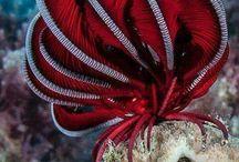 Mushrooms and  sea creatures