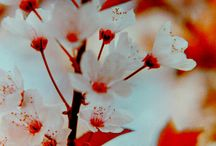 Lomography / by I Heart Flowers