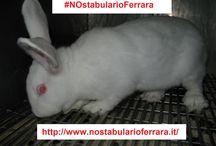 Campagna NO STABULARIO FERRARA / Protesta contro l'ampliamento dello stabulario dell'Università di Ferrara, dove sono detenuti animali (soprattutto roditori e conigli) da utilizzare in esperimenti, anche senza anestesia.  Informazioni: http://www.nostabularioferrara.it/ Petizione: http://goo.gl/cT8VOL