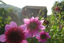 Cutting Garden dreams / sustainable organically grown flowers