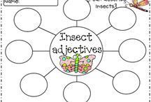 Insects all things Entomology