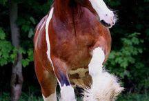 Hästar