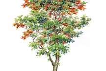 free hand tree