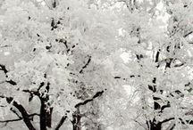 Ice Cold wonderland