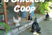 happy hen / chicken coop, happy chickens