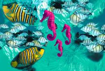 Technicolor Dive / Full color patterns from the collection 2015