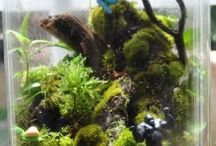 Terrarium. Tiny worlds