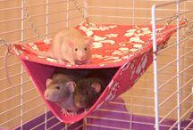 rat accesories