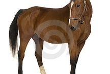 Animal Images / Pics of horses, dogs, cats