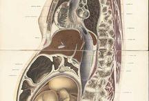Pregnancy Science