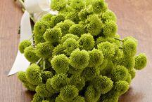 Le chrysanthème / La fleur de novembre sous toutes ses formes!