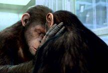 ((GRATUIT)) Voir La Planète des singes Streaming Film en Entier VF Gratuit