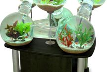 Fish and Terrariums