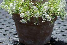 Flower Arranging and Florist's Ideas