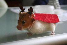 Reindeer impersonators