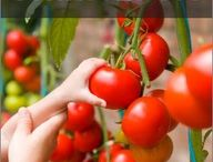 Gardening / by Kimberly Doyle