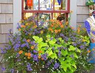 flori de geam