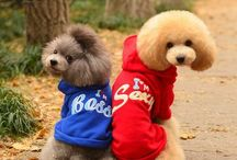 Dog / Dog stuff