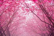 All pink!!!