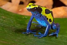 Fabulous Frogs / by Earth's Hope