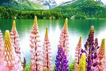 Nature & travel