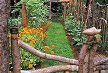 Garden - Fairy Garden  Ideas / by Marjorie Sakelik