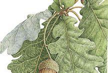 Листья плоды ягоды