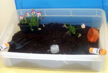 Preschool Gardening/Plants / by Stacy Moynahan Paradiso