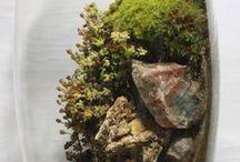 Micro-scapes & Terrariums