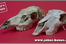 Ossuaries & Bone Art