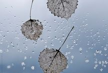 A touch of zen / The beauty of tranquility