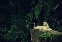 Rainforest Vibes / inspiration from the Amazon