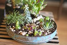 Gardens& Plants:  DIY/Care/Decor/Fun