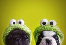 Crochet Dog Wear