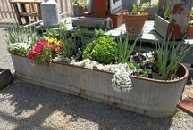 Container gardening / Large containers