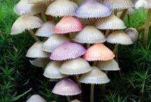Colourful fungi, mushrooms, lichen