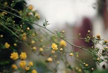 bloom + grow