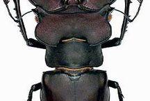 entomológia