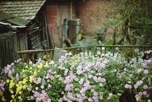 Kertépítő / Azok a növények, amelyek valamiért tetszenek. Azok a megoldások, amik tetszenek.