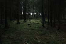 Landscapes | Forests / by Nicolas Rix