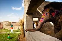 Designed for Animals / Bijzondere woningen en creaties gemaakt door mensen voor dieren.