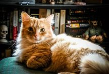 Beautiful Creatures: Orange Marmalade Tabby Cats / In honor of my Carlton. / by Shasta Seagle