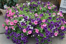 Hanging Baskets / by The Blueberry
