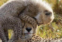Animals! / by Rebecca Lopez