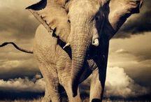 Éléphants ❤️