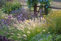 My flower garden ideas