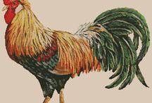 gallos y gallinas
